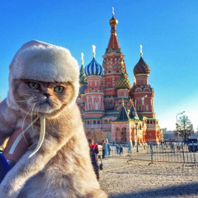 нарост, картинки с приколами по русски хорошими