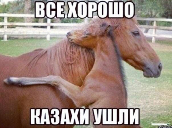 Смешные картинки казахстане, картинки жопы пример